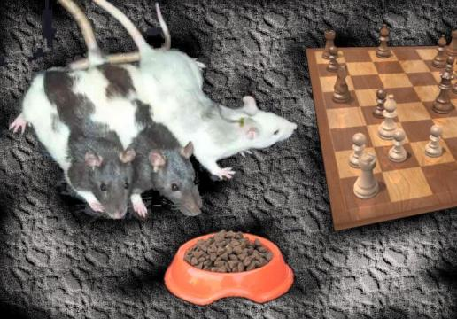 Photo courtesy of www.chessbase.com